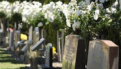 Headstones in burial area at Karrakatta Cemetery with white roses behind