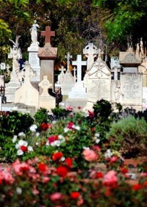 Headstones and roses Karrakatta Cemetery