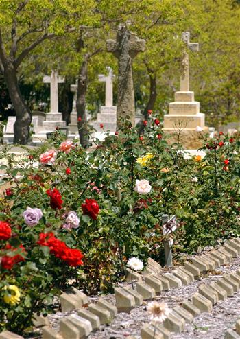Rose garden and ground niches Karrakatta Cemetery