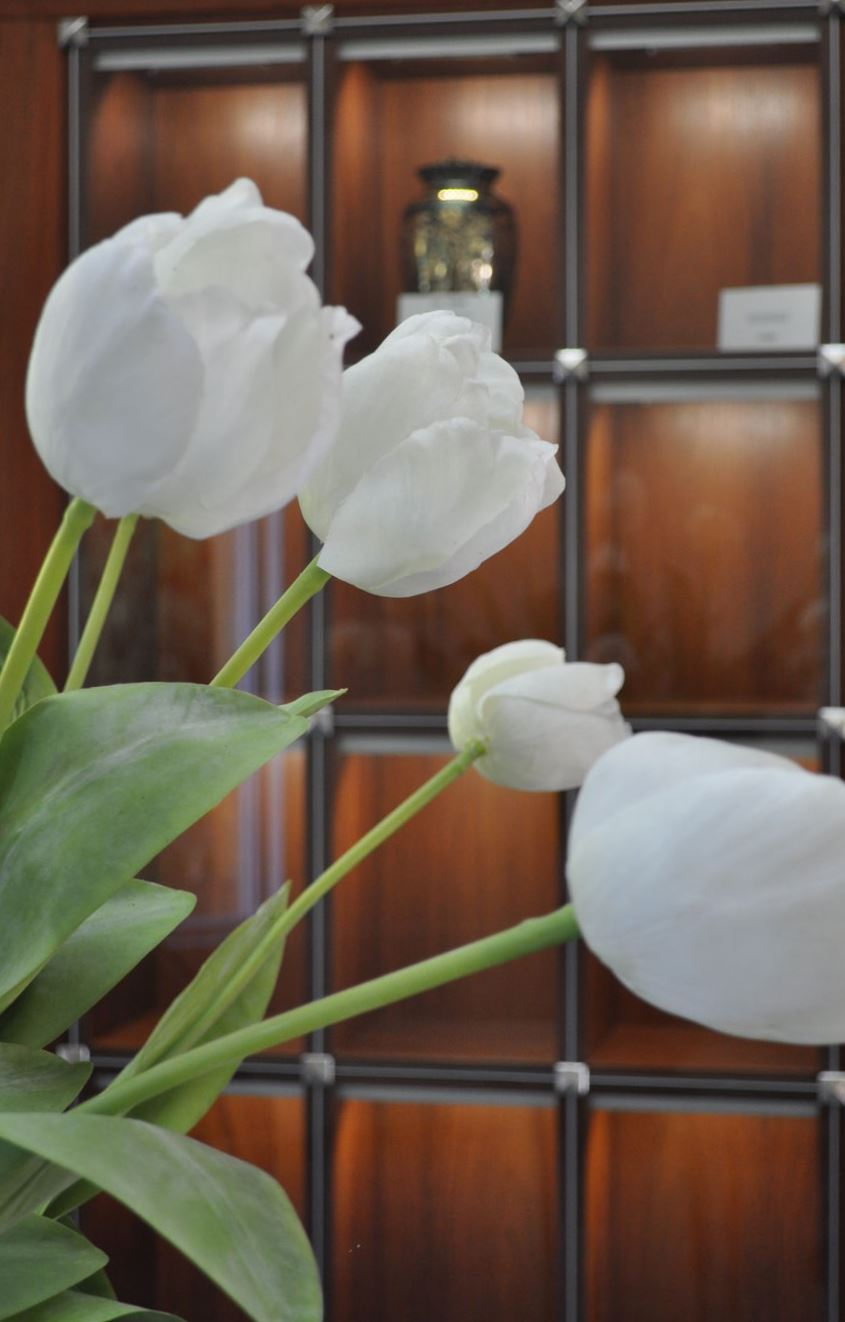 display niche white tulip